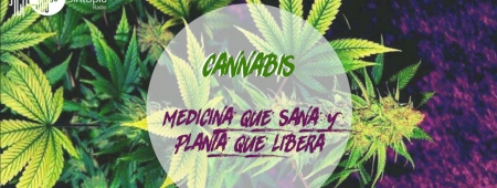 Cannabis: Medicina que sana y planta que libera